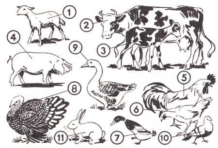 Viecher auf dem Bauernhof