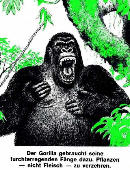 Der Gorilla nutzt seine furchterregenden Fänge dazu, Pflanzen -- nicht Fleisch -- zu verzehren