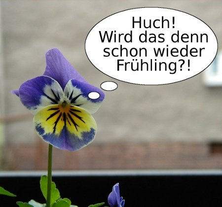 Huch! Wird das denn schon wieder Frühling?!