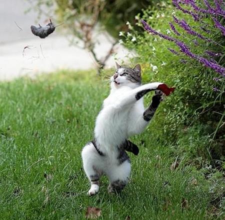 Aufschlag: Kittie -- Aus die Maus!
