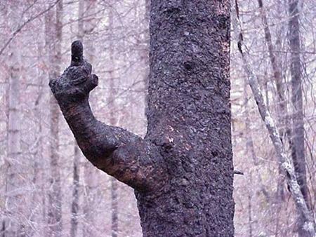 Fingerbaum