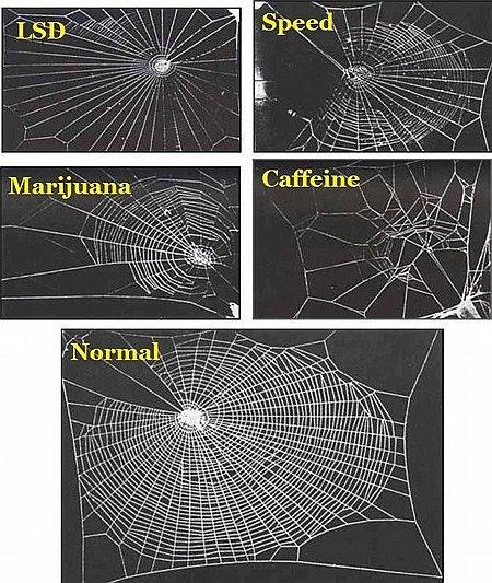 Spinnennetze unter dem Einfluss verschiedener Drogen