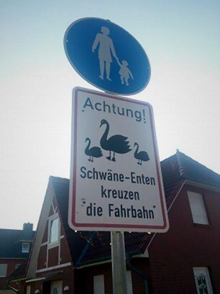 Achtung! Schwäne-Enten kreuzen die Fahrbahn