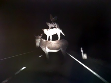 Die Bremer Stadtmusikanten im Scheinwerferlicht eines Autos kurz vor dem Unfall