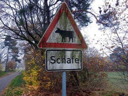 Verkehrsschild 'Vieh' mit dem Piktogramm einer Kuh, darunter der Text 'Schafe'