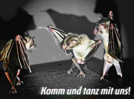 Auf den Kopf gestelltes Foto dreier hängender Fledermäuse, die aussehen, als tanzten sie. Dazu der Text: Komm und tanz mit uns!
