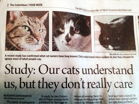 Study: Our cats understand us, but they don't really care