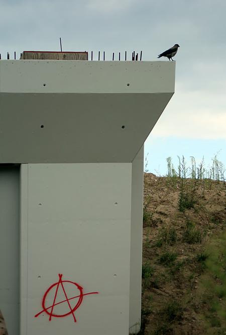 Foto eines Vogels, der auf einer Betonkonstruktion sitzt. Auf dem Beton ein Graffito eines Anarchie-Zeichens