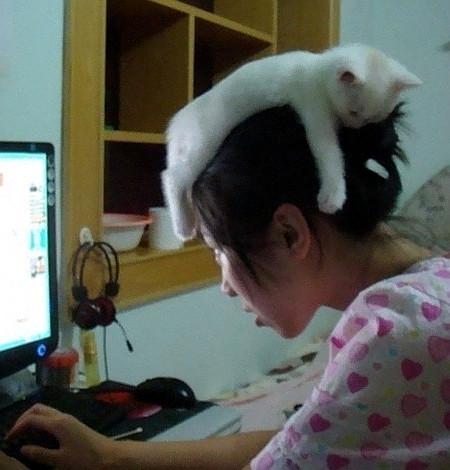 Mädchen sitzt vorm Computer, auf ihrem Kopf liegt eine Katze...