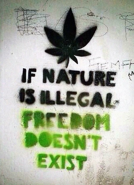 Graffito. Hanfblatt mit dem Text 'If nature is illegal, freedon doesn't exist'.