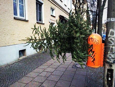 Der Versuch eines Idioten, einen Weihnachtsbaum in eine Plastik-Mülltonne an der Straße zu stecken
