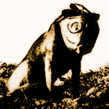 Sehr abstraktes, kaum noch kenntliches Bild eines Hundes mit Gasmaske.