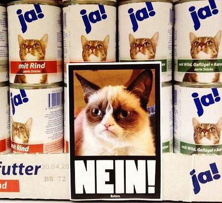Regal mit Katzenfutter der Marke 'Ja!', davor angebrachte Tafel in Barbara-Ästhetik mit einer unerfreut aussehenden Katze und dem Wort 'Nein!'