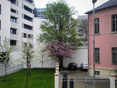 Wand und Baum