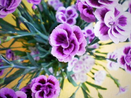 Ein paar hübsche Blüten