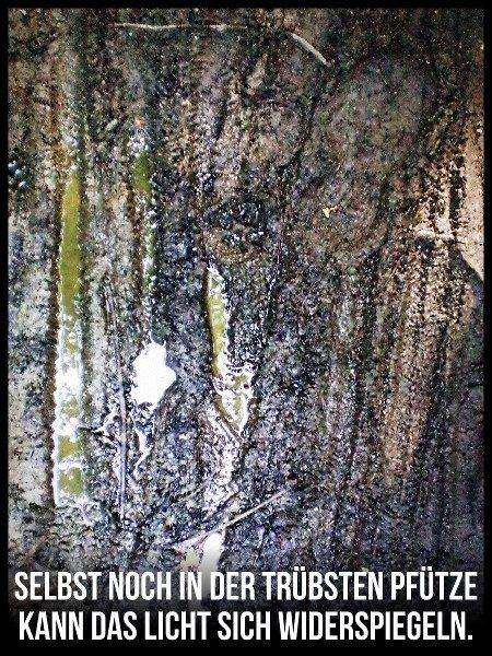 Foto eine sehr matschigen Pfütze, in der sich das Grün eines Waldes spiegelt