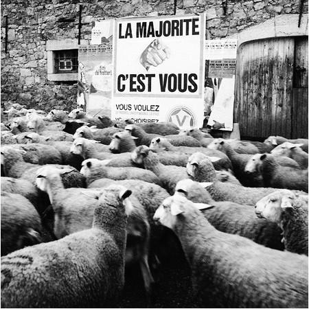 Eine Herde Schafe vor einem Schild: La majoritè, c'est vous