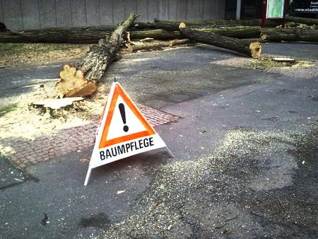 Aufstell-Warnschild 'Baumpflege' vor einem gefällten Baum