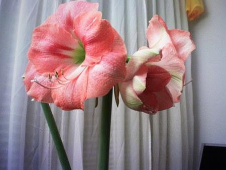 Allerdings nur pflanzliche Genitalien, auch 'Blüten' genannt.