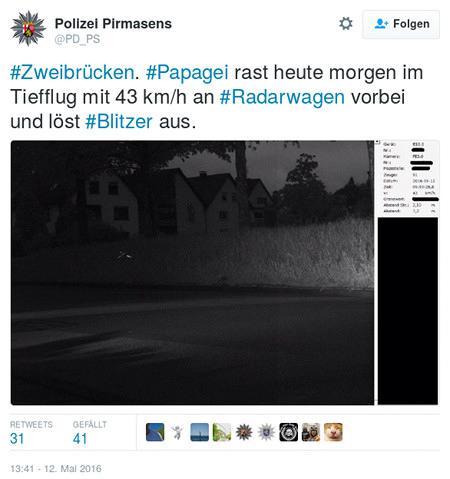 Tweet der Polizei Pirmasens (@PD_PS): '#Zweibrücken. #Papagei rast heute morgen im Tiefflug mit 43 km/h an #Radarwagen vorbei und löst Blitzer aus.' -- darunter ein Foto...