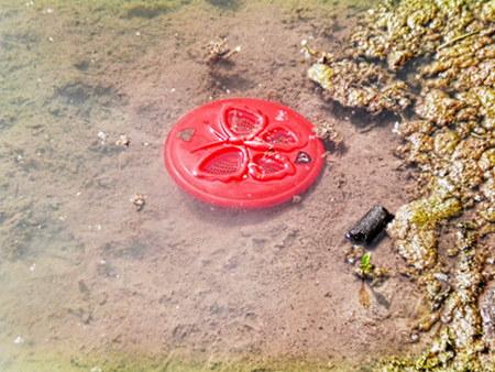 Hässliche rote Frisbee-Scheibe mit Schmetterling-Motiv, die in einem sumpfigen Teich dümpelt