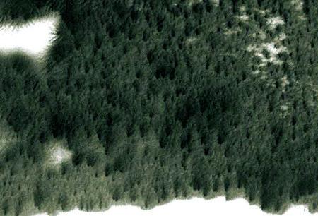 Foto von der Marsoberfläche, das bei erster Betrachtung wie Vegetation aussieht