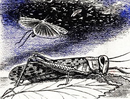 Darstellung einer Heuschreckenplage aus einer Publikation der Zeugen Jehovas aus den Dreißiger Jahren