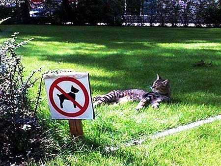 Schwer beschreibbares Foto einer hingefläzten Katze auf einer Wiese, die für Hunde verboten ist