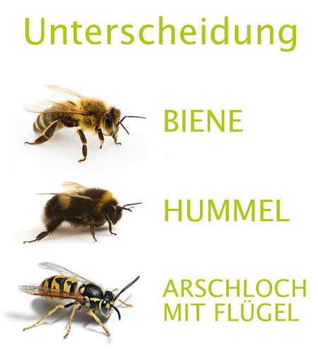 Bild einer Biene, daneben 'Biene'. Bild einer Hummel, daneben 'Hummel'. Bild einer Wespe, daneben' Arschloch mit Flügel'.