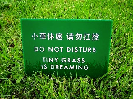 Do not disturb! Tiny grass is dreaming.