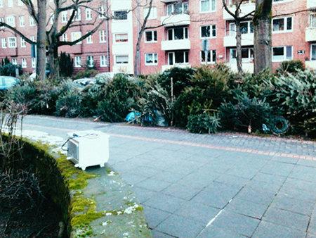 Nutzlos gewordene Weihnachtsbäume am Straßenrand