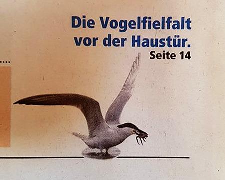Die Vogelfielfalt vor der Haustür -- Seite 14