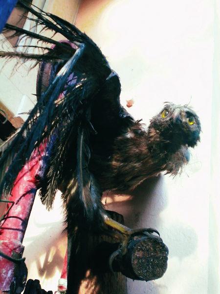 Halb zerfallener, ausgestopfter Vogel