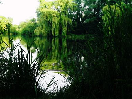 Digital nachbearbeitetes Foto von einem von Bäumen und Gräsern umgebenen See, in dessen Wasser sich das Grün spiegelt