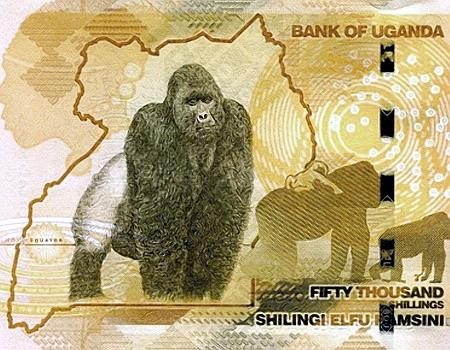 Banknote über 50.000 Shilling der Bank of Uganda -- Motiv ist ein Gorilla.