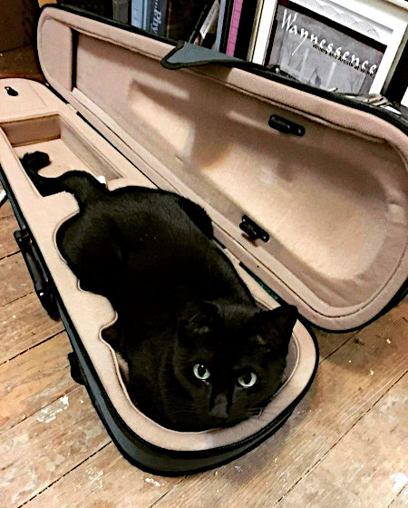 Katze in einem Violinenkasten.