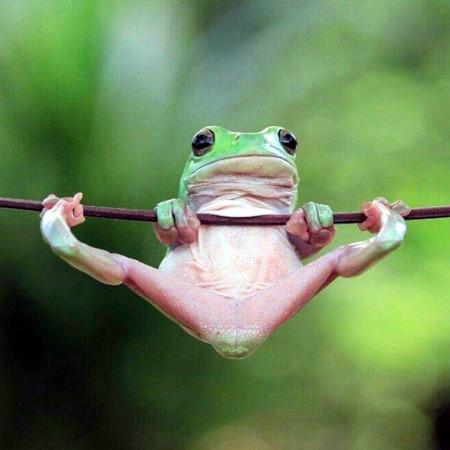 Unbeschreibliches Foto von einem Frosch
