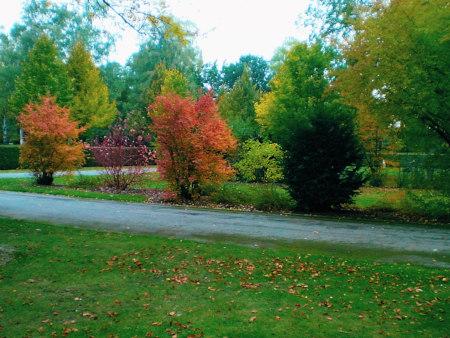 Herbstlich bunte Sträucher an einem Weg
