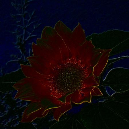 Stark digital bearbeitetes Foto einer Sonnenblumenblüte