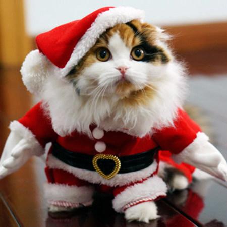 Schwer beschreibbares Foto von einer Weihnachtsmann-Katze