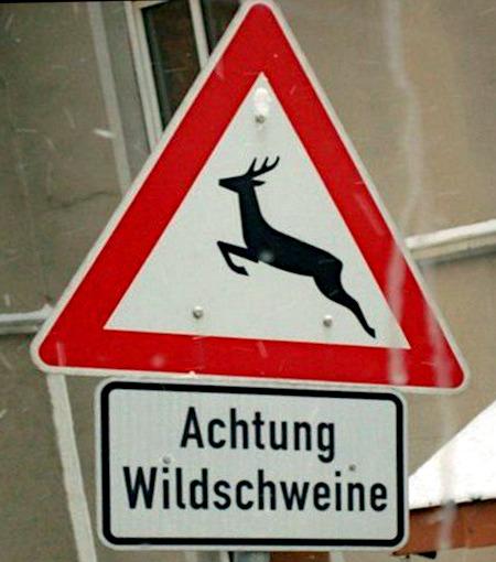 Verkehrszeichen 'Wildwechsel' (mit einem Reh als Motiv) mit Zusatzschild 'Achtung Wildschweine'.