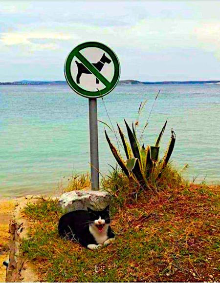 Unbeschreibliches Foto einer Katze, die an einem für Hunde gesperrten Strand vor dem Verbotsschild herumliegt
