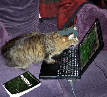 Katze sitzt vor einem Klapprechner und schaut auf ein Terminalprogramm. Daneben ein Buch 'hackers'.