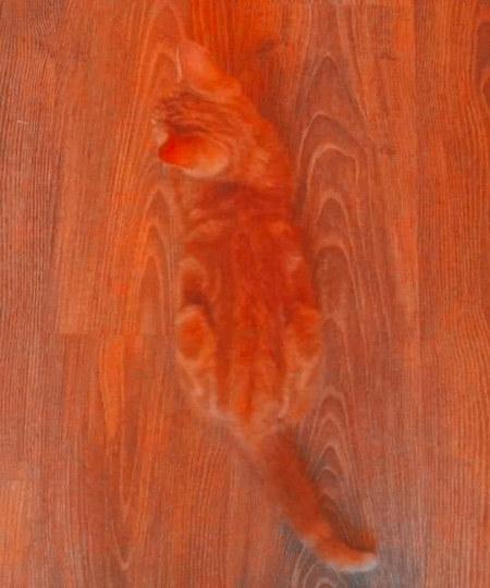 Foto einer Katze auf einem Holzboden; das Muster im Katzenfell macht die Katze auf dem Foto beinahe unsichtbar.