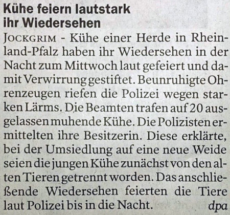 Kühe feiern lautstark ihr Wiedersehen -- Jockgrim -- Kühe einer Herde in Rheinland-Pfalz haben ihr Wiedersehen in der Nacht zum Mittwoch laut gefeiert und damit Verwirrung gestiftet. Beunruhigte Ohrenzeugen riefen die Polizei wegen starken Lärms. Die Beamten trafen auf 20 ausgelassen muhende Kühe. Die Polizisten ermittelten ihre Besitzerin. Diese erklärte, bei der Umsiedlung auf eine neue Weide seien die jungen Kühe zunächst von den alten Tieren getrennt worden. Das anschließende Wiedersehen feierten die Tiere laut Polizei bis in die Nacht. (dpa)