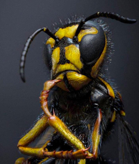 Unbeschreibliches Foto einer Wespe