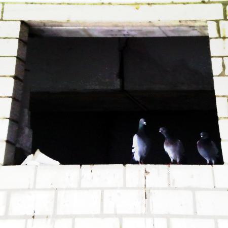 Tristes Bild von drei Tauben in der Ruine des Ihmezentrums in Hannover-Linden