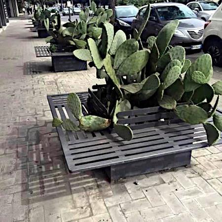 Schwierig zu beschreibendes Foto von Sitzbänken, die jeweils rund um wuchernde Kakteen gebaut wurden und nun für eine recht stachelige Sitzerfahrung sorgen würden