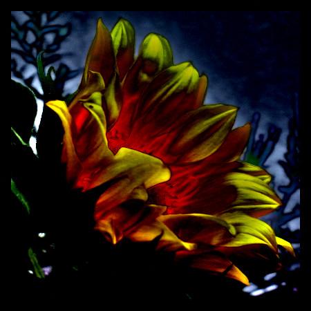 Stark mit Gimp bearbeitetes Foto einer Sonnenblume