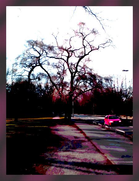 Stark mit Gimp nachbearbeitetes Foto eines Autos, das an einem entlaubten Baum vorbeifährt